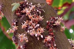 Цветы на шоколадном дереве