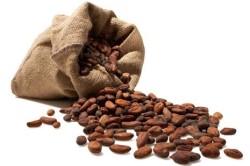 Отборные бобы для качественного шоколада