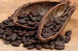 Какао-бобы для производства шоколада