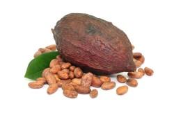 Какао-бобы для приготовления шоколада