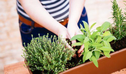 овощи выращивание рассады