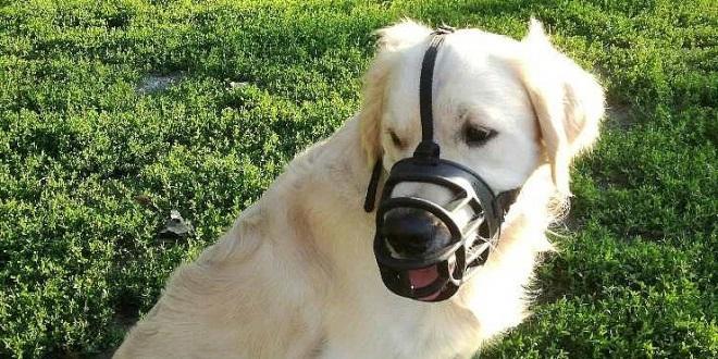 намордник для собак